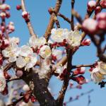 Hasen, Ostern, Familie – Wochenende in Bildern 26., 27. und 28. März