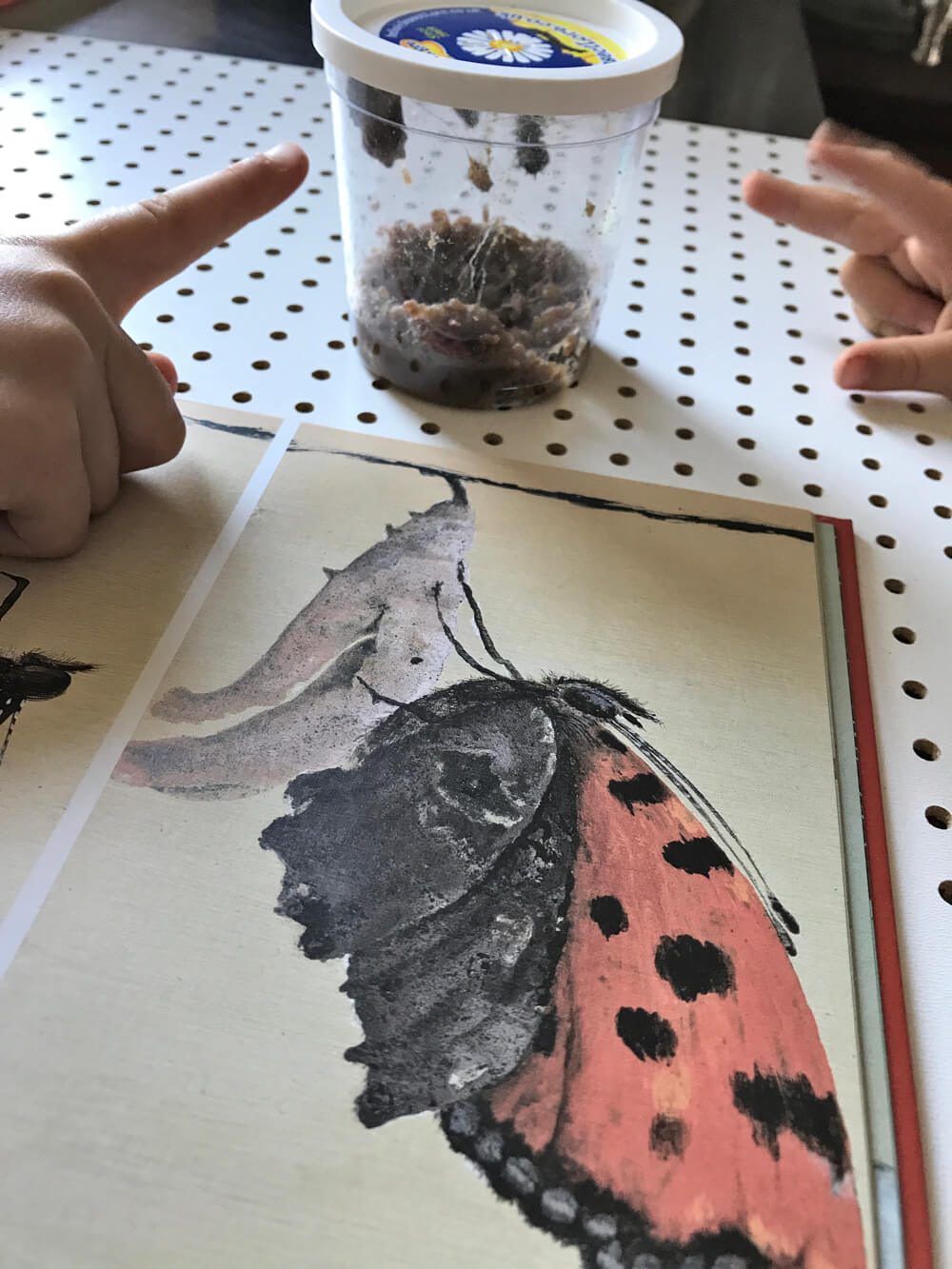 insect lore die kleine botin 3