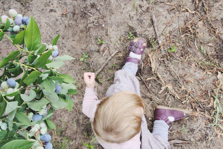 Heidelbeerfeld die kleine botin 3