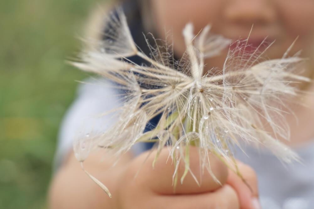 kraeuter natur weben die kleine botin 4