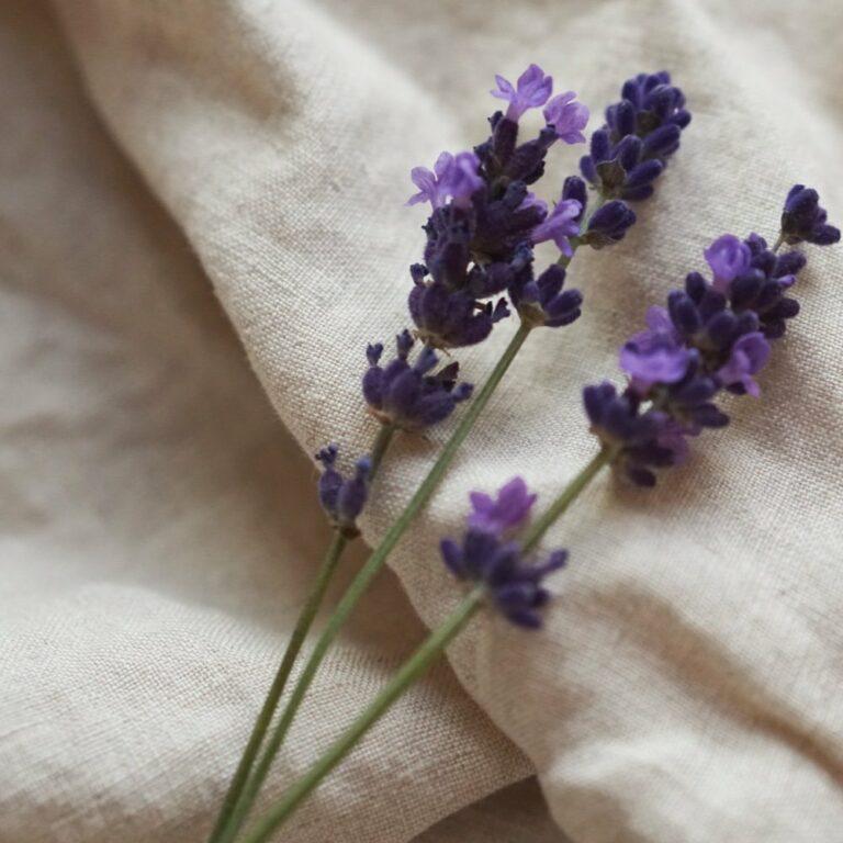 Hilft Lavendel beim Einschlafen?