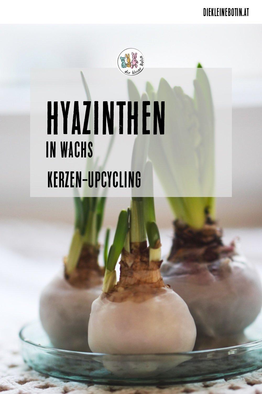 hyazinthen wachs pinterest
