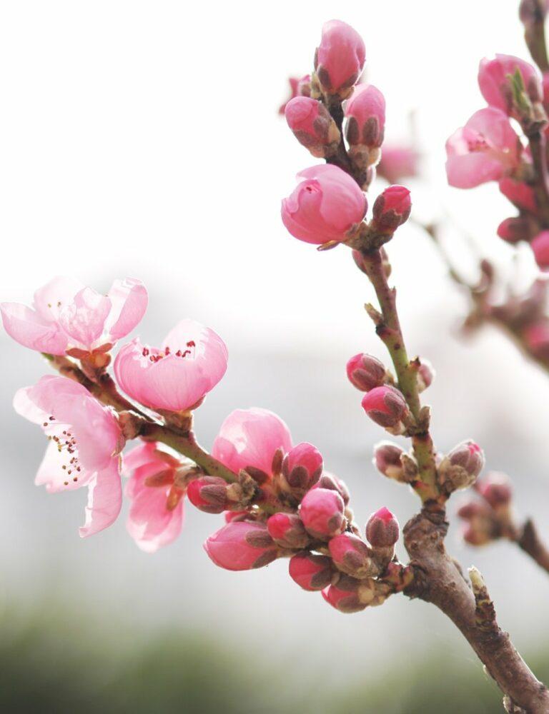 Wir entdecken den Frühling | 7 bereichernde Alltagserlebnisse mit Kindern