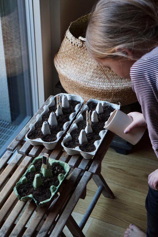 urban gardening anzucht 4