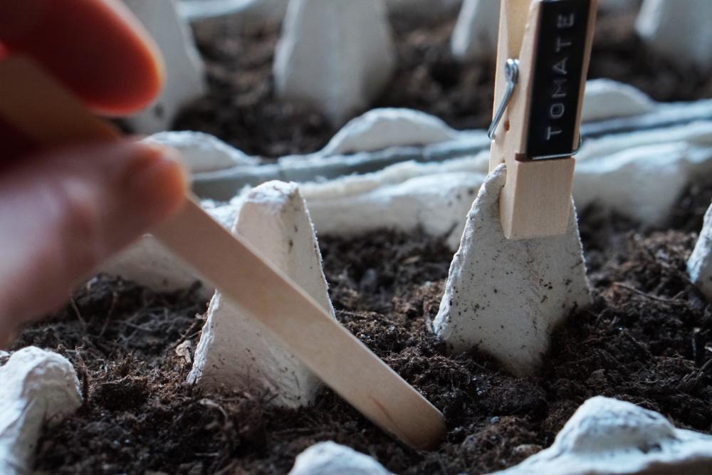 urban gardening anzucht 7