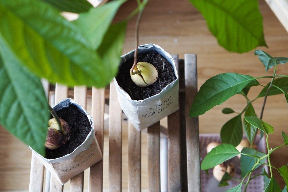 avocado tetrapak insta 6 1