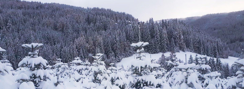 tannenbaum weihnachtsbaum header 1