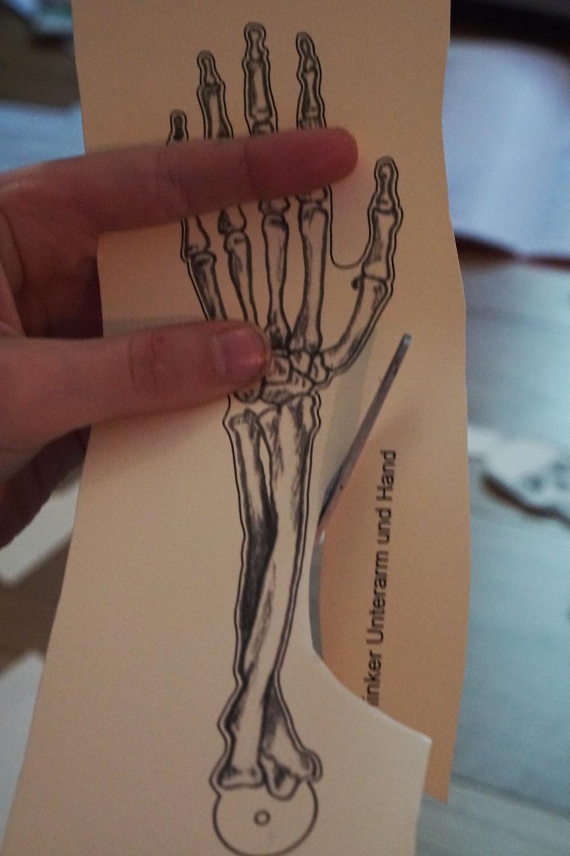 skelett diy 1 1