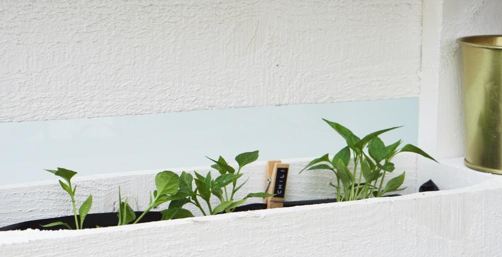 palette pflanzenmoebel 10