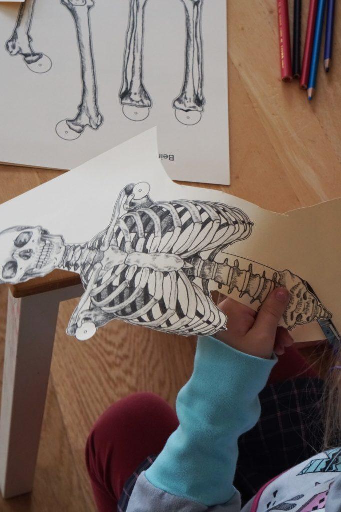 skelett diy 2