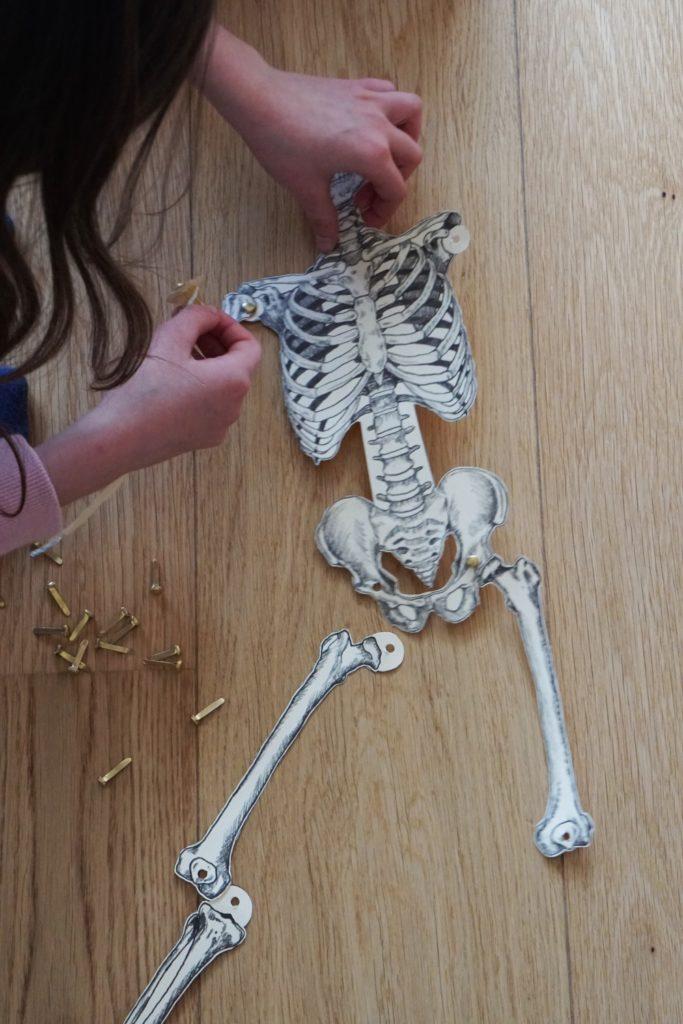 skelett diy 4