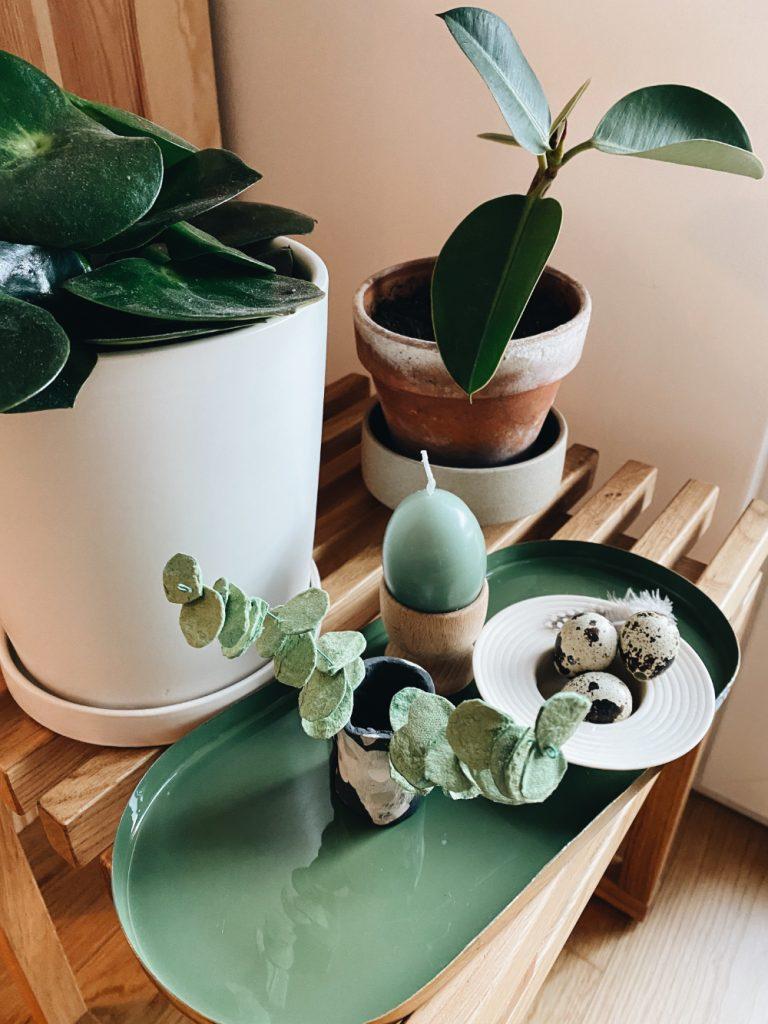 eucalyptus aus Eierkarton